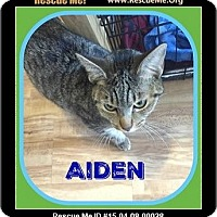 Adopt A Pet :: Aiden - Milton, GA