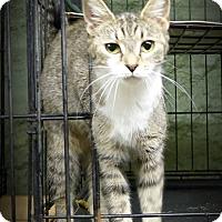 Adopt A Pet :: Honey - Marlinton, WV