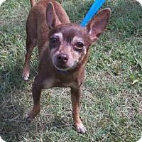 Adopt A Pet :: China - Suffolk, VA