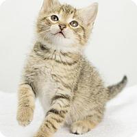 Adopt A Pet :: Fern - Oxford, MS