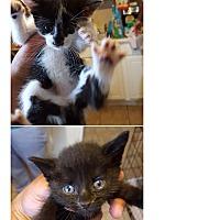 Adopt A Pet :: Males - Garwood, NJ