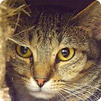 Adopt A Pet :: Bindi - Addison, IL