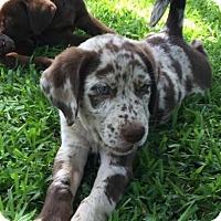 Adopt A Pet :: Smoke - Adopted! - Ascutney, VT