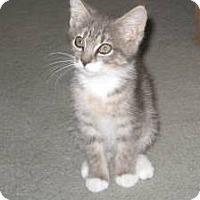 Adopt A Pet :: Sugar - Kirkwood, DE