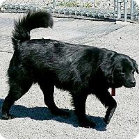 Adopt A Pet :: Cherry - Urbana, OH
