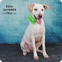Adopt A Pet :: ELSIE - Conroe, TX
