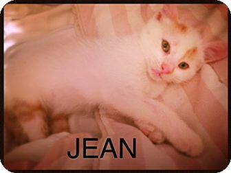 Domestic Shorthair Kitten for adoption in Brooklyn, New York - Jean