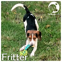 Adopt A Pet :: Fritter - Pittsburgh, PA
