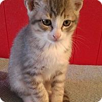 Adopt A Pet :: Tate - McKinney, TX