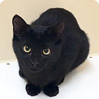 Adopt A Pet :: Corey - Cumming, GA