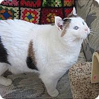Adopt A Pet :: Marine - Glenwood, MN