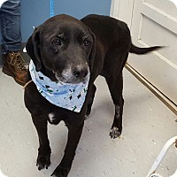 Adopt A Pet :: Lucy - Maryville, IL