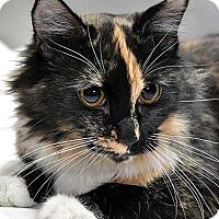 Adopt A Pet :: Maisy - Fort Leavenworth, KS