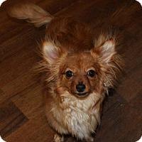 Adopt A Pet :: Ginger - Prosser, WA