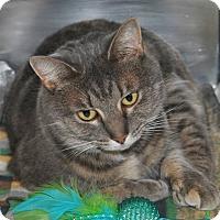 Adopt A Pet :: Lauria - Windsor, VA
