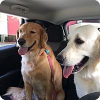 Adopt A Pet :: Amy and Anna - Murdock, FL