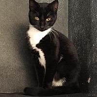 Adopt A Pet :: FC 53/Pharah - Waycross, GA
