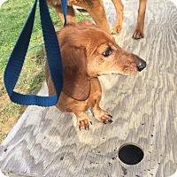 Adopt A Pet :: Bonnie n clyde - Pompton Lakes, NJ