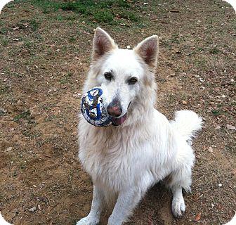 German Shepherd Dog Dog for adoption in Dundee, Florida - Gee