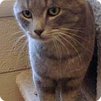 Adopt A Pet :: Dusty - Chattanooga, TN
