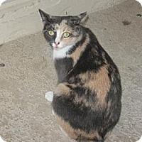 Adopt A Pet :: Abigail - Ft. Lauderdale, FL