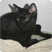 Adopt A Pet :: Lindsey - Marietta, GA