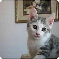 Adopt A Pet :: Star - Irvine, CA