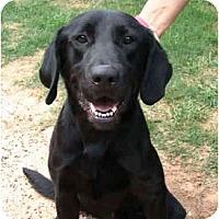 Adopt A Pet :: Manni - Kingwood, TX