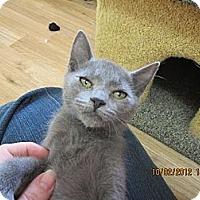 Adopt A Pet :: Hemi - Bunnell, FL