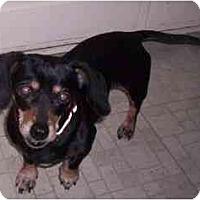 Adopt A Pet :: LUCKY 7 - Portland, OR