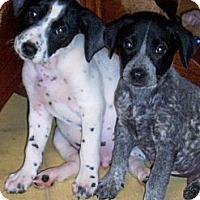 Adopt A Pet :: Theo - Salem, NH