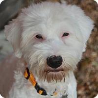 Adopt A Pet :: Lindy Lou - Norwalk, CT