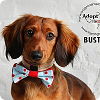 Adopt A Pet :: Buster-adoption pending - Omaha, NE