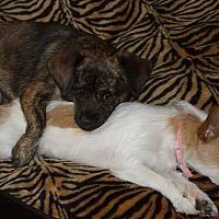 Adopt A Pet :: Niko - Dothan, AL