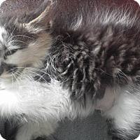 Adopt A Pet :: Vivian - Fairborn, OH