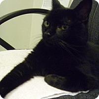 Adopt A Pet :: Jack - Hamburg, NY