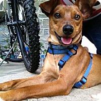 Adopt A Pet :: Rocky - Doylestown, PA
