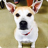 Adopt A Pet :: Jewel - Great Bend, KS