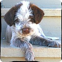 Adopt A Pet :: Mater - Johnson City, TX