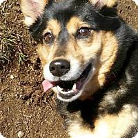 Adopt A Pet :: Sarge - Canterbury, CT