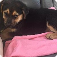 Adopt A Pet :: Leif - Rocky Mount, NC