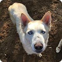 Adopt A Pet :: Keiko - Elkhart, IN