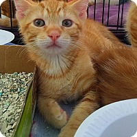 Adopt A Pet :: Sammy - Marlton, NJ