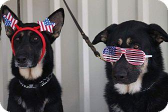 German Shepherd Dog Mix Dog for adoption in Houston, Texas - Dakota & Blue