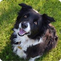 Adopt A Pet :: Skippy - Regina, SK