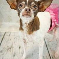 Adopt A Pet :: Dollie - Scottsdale, AZ