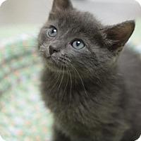Adopt A Pet :: Julie Ann - DFW Metroplex, TX