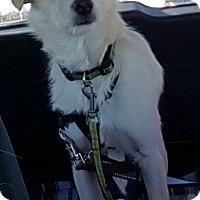 Adopt A Pet :: Coby - Flemington, NJ