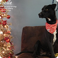 Adopt A Pet :: Noelle - Bucyrus, OH