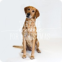 Adopt A Pet :: Bosco - Naperville, IL